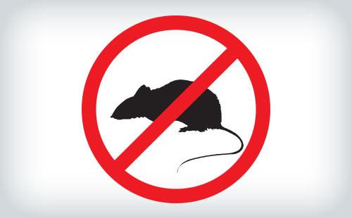 Infestações de animais/pestes